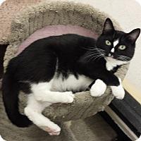 Adopt A Pet :: Kelly - Chesapeake, VA
