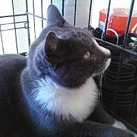 Adopt A Pet :: Carly - Miami, FL