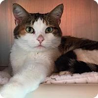 Adopt A Pet :: Marble - Topeka, KS