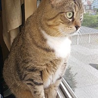 Adopt A Pet :: Belle Cat - Cincinnati, OH