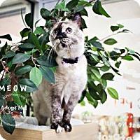 Domestic Mediumhair Cat for adoption in Kansas City, Missouri - Mow
