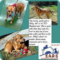 Adopt A Pet :: Abby - Englewood, FL