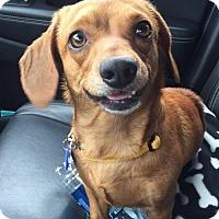 Adopt A Pet :: Mars - San Antonio, TX