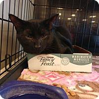 Adopt A Pet :: Laird - Avon, OH