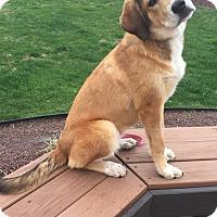 Adopt A Pet :: Gretchen - New Oxford, PA