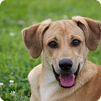 Adopt A Pet :: Bob Ross - Jersey City, NJ