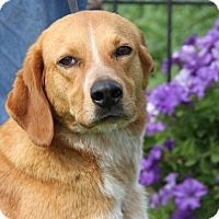 Adopt A Pet :: Mandy - Marietta, OH