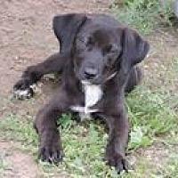 Adopt A Pet :: Sable - Cottonport, LA