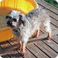 Adopt A Pet :: Carabella - Homer, NY