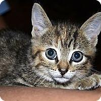 Adopt A Pet :: Avon - Xenia, OH