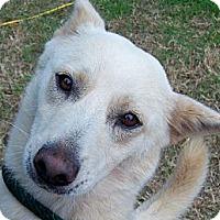 Adopt A Pet :: Belle - courtesy post - Glastonbury, CT