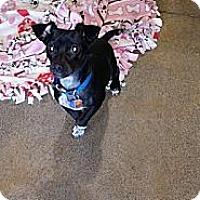 Adopt A Pet :: Zeus - Puyallup, WA