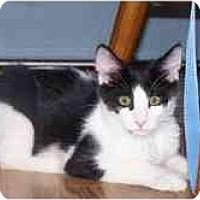 Adopt A Pet :: Remy - Davis, CA