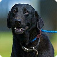 Adopt A Pet :: Jameson - Providence, RI