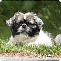 Adopt A Pet :: Gizmo - Mays Landing, NJ