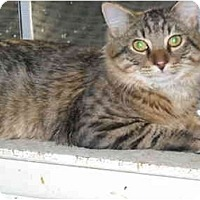 Adopt A Pet :: Danny Boy - Arlington, VA