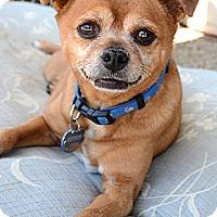 Adopt A Pet :: Chad - Acton, CA