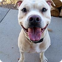 Adopt A Pet :: Eddie - Cedar City, UT