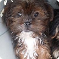 Adopt A Pet :: Wilow - Algonquin, IL