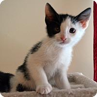 Adopt A Pet :: Jasper - Port Republic, MD