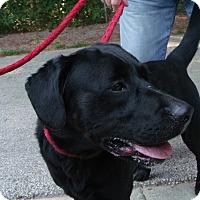 Adopt A Pet :: Buster - Muskegon, MI