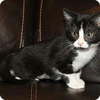 Adopt A Pet :: Lydia - Irvine, CA