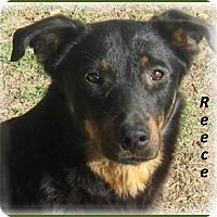 Adopt A Pet :: Reece - Marlborough, MA