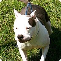 Adopt A Pet :: Sky - Erwin, TN