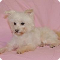 Adopt A Pet :: Aurora - Encino, CA