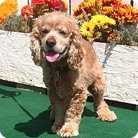 Adopt A Pet :: Mason - Santa Barbara, CA