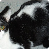 Adopt A Pet :: Spunky - Dallas, TX