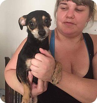 Chihuahua Mix Puppy for adoption in Weatherford, Texas - Princess