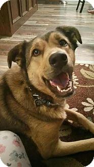Shepherd (Unknown Type)/Husky Mix Dog for adoption in Duchess, Alberta - Buddy