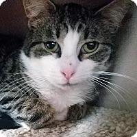 Adopt A Pet :: Tyler - Queens, NY