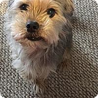 Adopt A Pet :: Harley - Boise, ID
