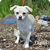 Adopt A Pet :: Dunn - Yreka, CA