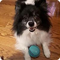 Adopt A Pet :: Maggie 3298 - Toronto, ON