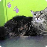 Adopt A Pet :: JUMPY - Houston, TX