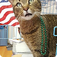 Adopt A Pet :: Stitch - Acushnet, MA