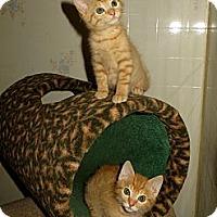 Adopt A Pet :: Toby & Tucker - Arlington, VA