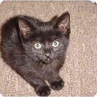 Adopt A Pet :: Sybil - Lake Charles, LA