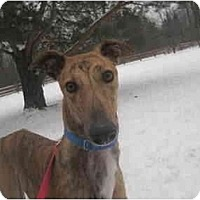 Adopt A Pet :: Troy (Where's Destroy) - Chagrin Falls, OH
