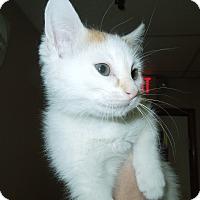 Adopt A Pet :: GI Jane - Medina, OH