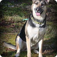 Adopt A Pet :: Kaiya - Gig Harbor, WA