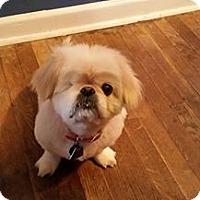 Adopt A Pet :: Peggy Sue - Virginia Beach, VA