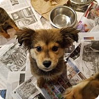 Adopt A Pet :: Teddy Ruxpin (ADOPTED!) - Chicago, IL