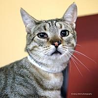Adopt A Pet :: Wonton - Tucson, AZ