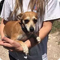 Adopt A Pet :: Princess - Weatherford, TX