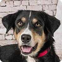 Adopt A Pet :: Petey - Columbia, IL