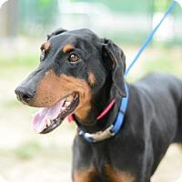 Adopt A Pet :: Hilda - Matthews, NC